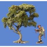 Bush oak