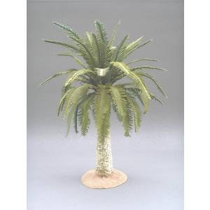 Small date palm tree